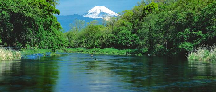 柿田川と富士山